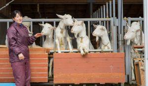 私の場合、信濃町では人よりもヤギと会う数の方が多いんですよね