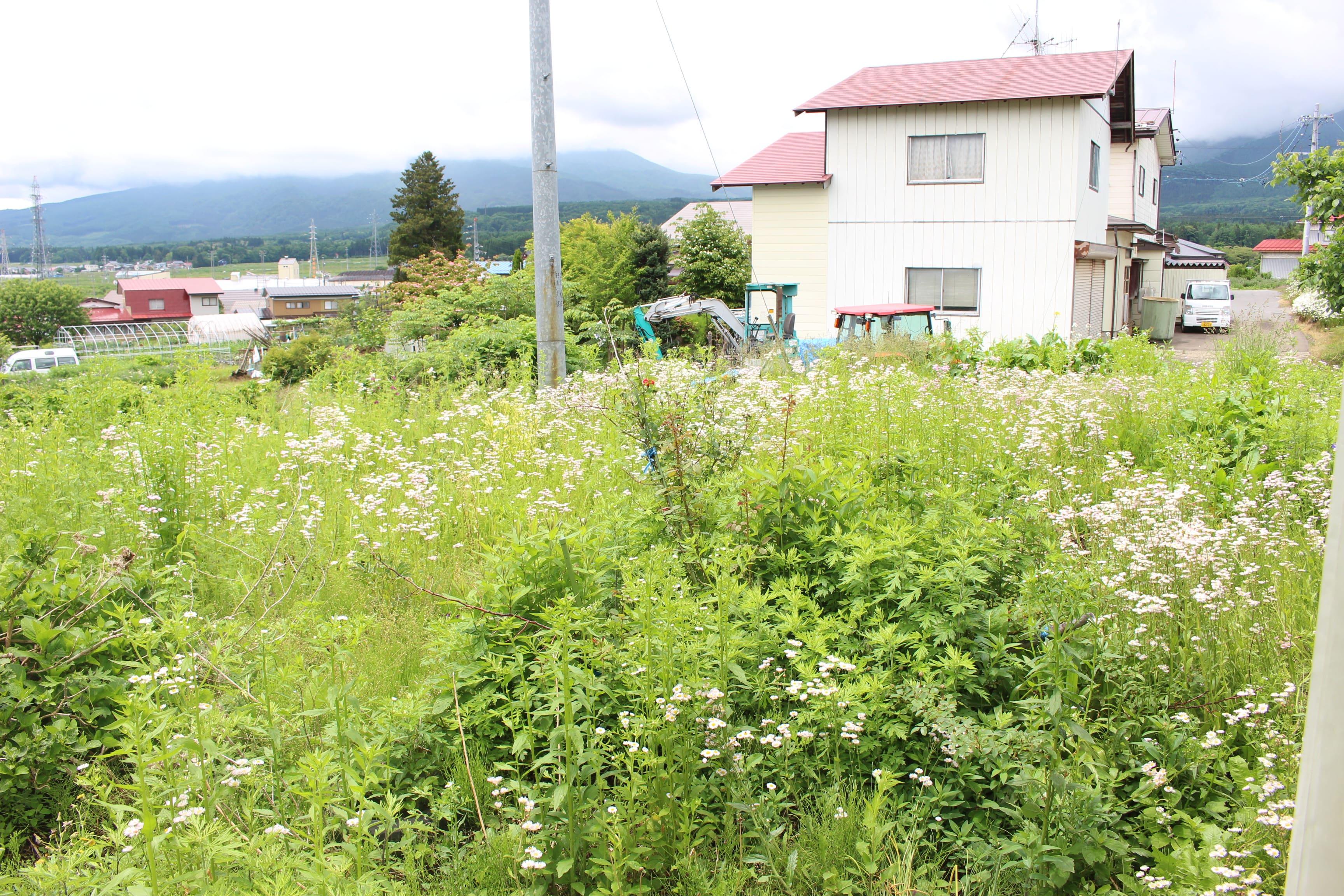 家庭菜園にも使いやすい広さのお庭付きです