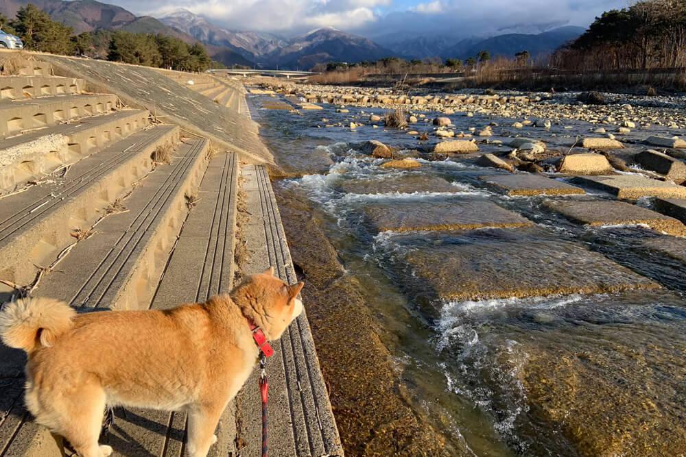 長野県須坂市の百々川沿いを犬と散歩