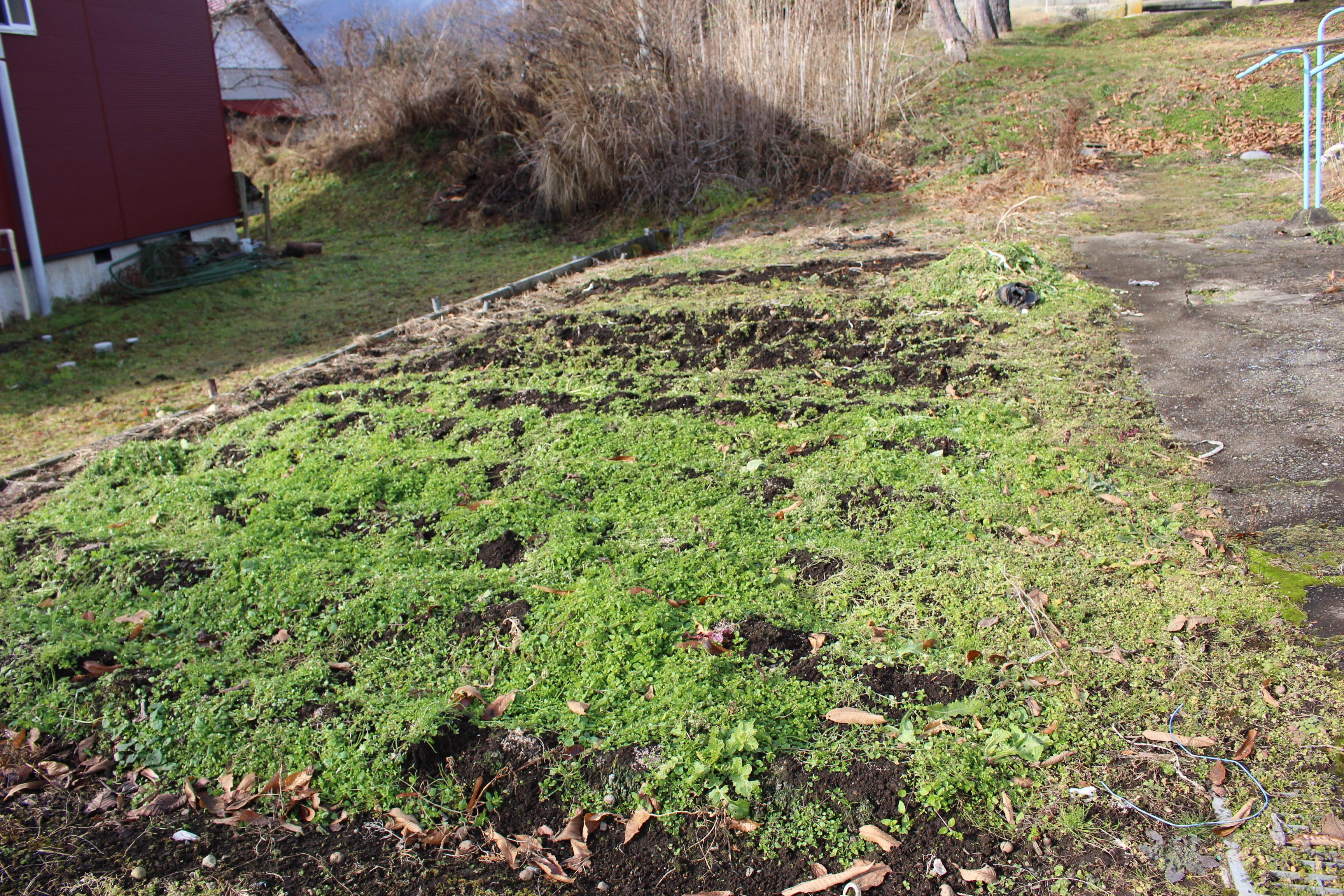 庭先には手ごろな畑もあります!